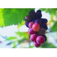 Wholesale Grapeskinextract from china suppliers