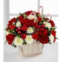 Wholesale Red Carnation NO.51 taipei flower delivery from china suppliers