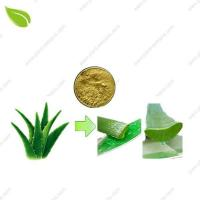 Wholesale Aloe Vera Extract from china suppliers
