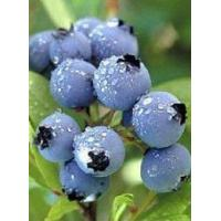 Wholesale Blueberry Juice Powder from china suppliers