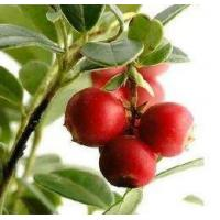Wholesale Cranberry Juice Powder from china suppliers