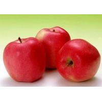 Wholesale Apple Fruit Powder from china suppliers