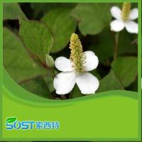 Buy cheap Heartleaf Houttuynia from wholesalers