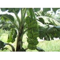 Wholesale Banana Fiber Textile Products -----Fruit Clothing,Love Life,Love Earth from china suppliers