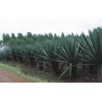 Wholesale Sisal Products (SP) from china suppliers