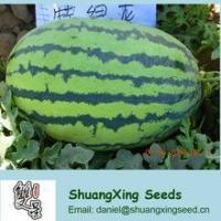 Wholesale Emperor No.1Big f1 hybrid watermelon seed from china suppliers