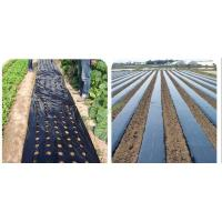Wholesale Pe mulching film with hole from china suppliers