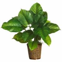 """Wholesale 29"""" Large Leaf Philodendron Silk Plant (Real Touch) from china suppliers"""
