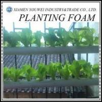 Wholesale Florist Foam Blocks/Soilless Culture Foam For Greenhouse from china suppliers