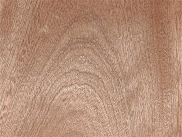 Natural wood veneer mahogany crown cut of item
