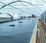 Wholesale Plantation Aquaculture House from china suppliers