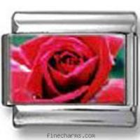 Wholesale Red Rose Photo Italian Charm from china suppliers