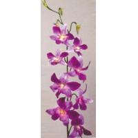 Buy cheap Dendrobium Orchid from wholesalers