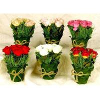 Buy cheap Rose Garden from wholesalers