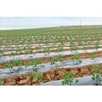 Buy cheap Mulch Film from wholesalers