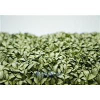 Wholesale Fittonia White Anne from china suppliers