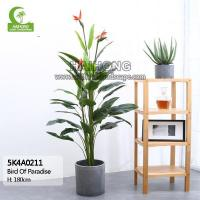 Wholesale Haihong Insights Bird Of Paradise from china suppliers
