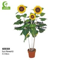 Wholesale Haihong Insights Sunflower from china suppliers