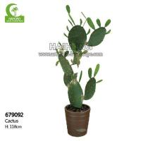 Wholesale Haihong Insights Cactus from china suppliers
