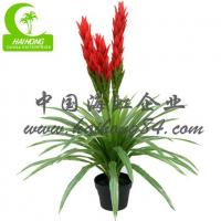 Wholesale Haihong Insights PINEAPPLE from china suppliers