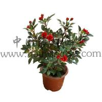 Wholesale Haihong Insights Artificial Flowers (Indoor & Outdoor) artificial mini rose flower plant from china suppliers