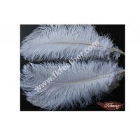 China Ostrich Feathers on sale