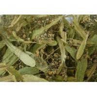 Wholesale Duan shu hua herbs for sale with Dried Linden Flower from china suppliers